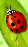 Ladybug wallpaper 480x800