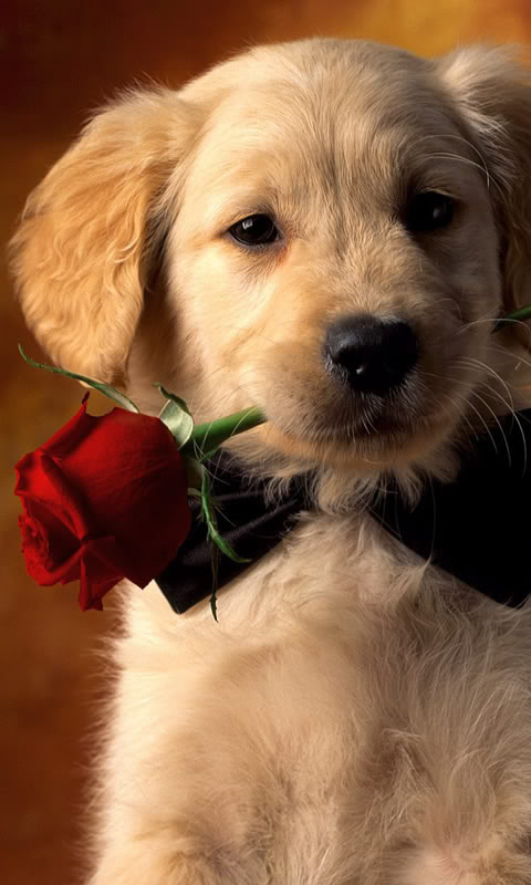 Cute puppy wallpaper 480x800