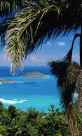Ocean and palms wallpaper
